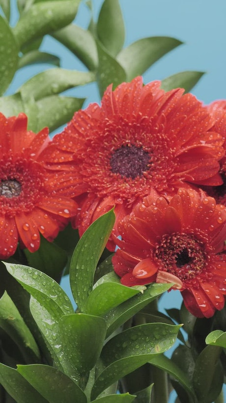 Flower arrangement on a blue background