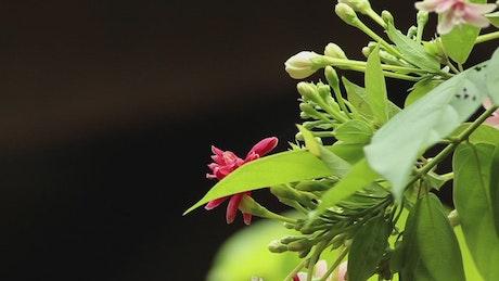 Flower buds in the sunshine