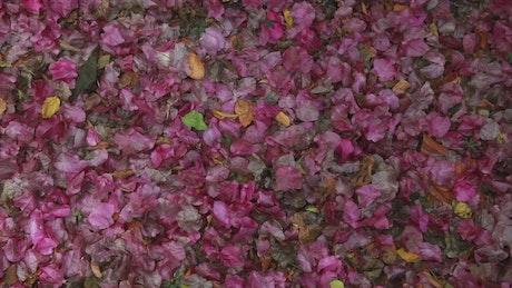Flower petals covering the floor