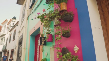 Flowerpots hanging on colorful walls