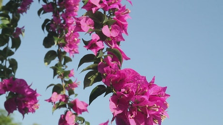 Flowers against a clear blue sky