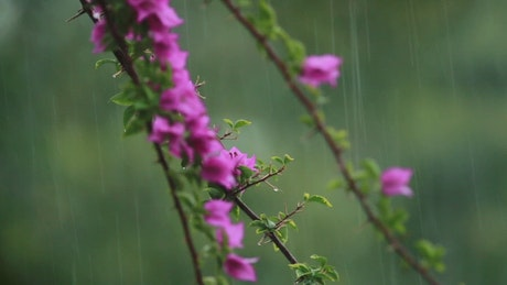 Flowers during heavy rainfall