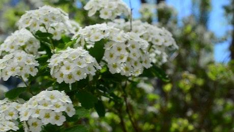 Flowers growing in Spring