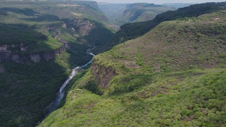 Fly over a huge canyon covered in vegetation