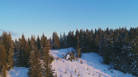 Fly over a pine mountain at winter