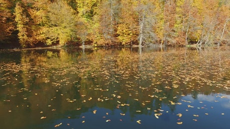 Flying above a lake with autumn leaves