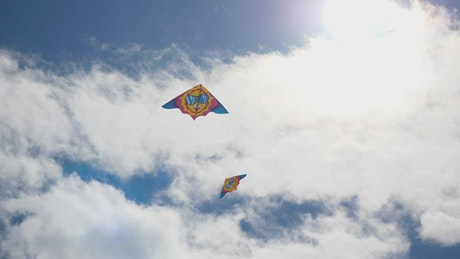 Flying kites in a city park