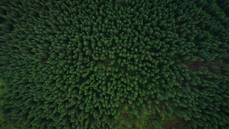 Flying over a beautiful green forest