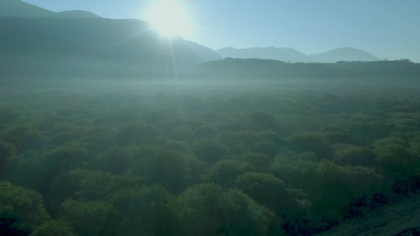 Flying over a forest between mountains