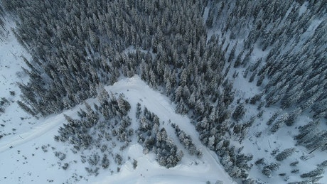 Flying over a huge winter forest full of pines