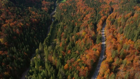Flying over an autumn forest and a empty road