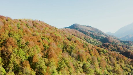 Flying over hills covered in Autumn trees