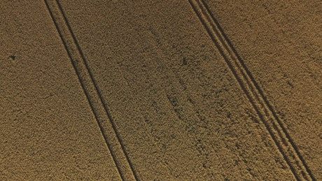 Flying over summer crops