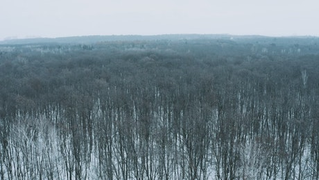 Flying slowly over a winter forest