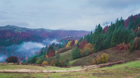 Fog covering an autumn forest