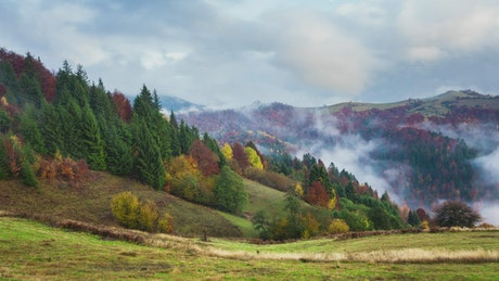 Fog covering an autumnal forest, time-lapse