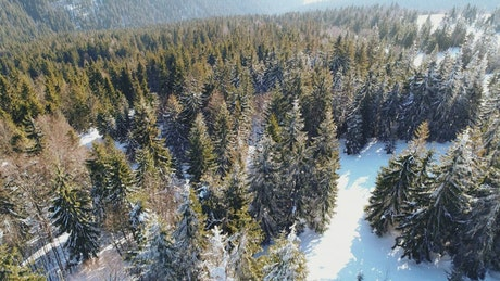 Forest at the end of winter, aerial shot