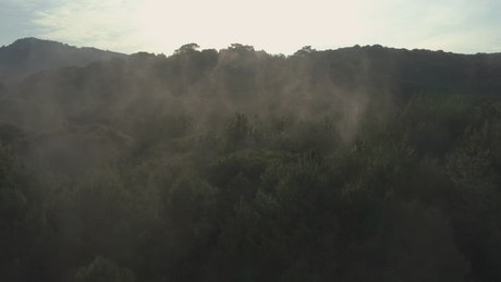 Forest covered by a mist seen from the air