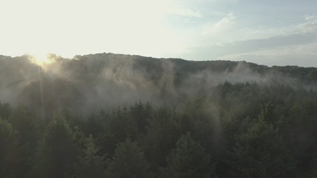 Forest covered by mist at sunrise from the heights