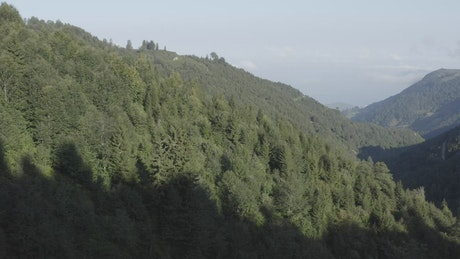 Forest covered hills