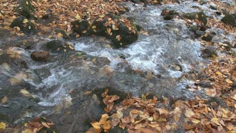 Forest creek in autumn