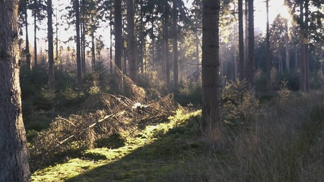 Forest during the morning