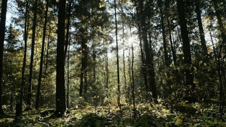 Forest full of plants, landscape