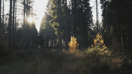 Forest illuminated by the sun's rays