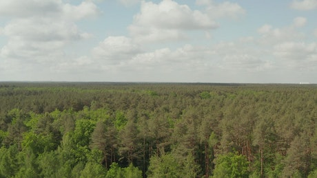 Forest in spring full of trees, high aerial view