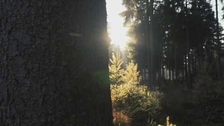 Forest in the sunlight