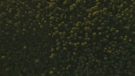Forest of abundant trees traveled from above