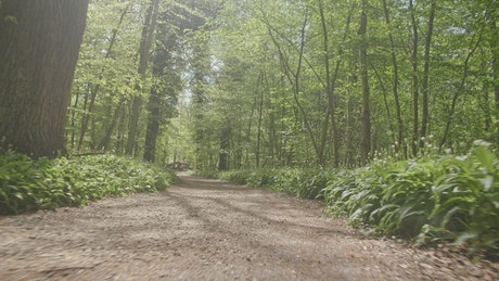 Forest running trail in summer