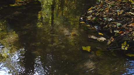 Forest stream with fallen leaves