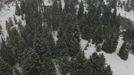 Forest with a river during winter