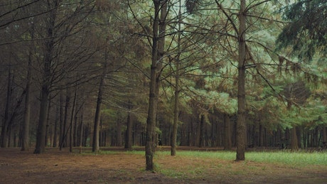 Forest with leafless trees