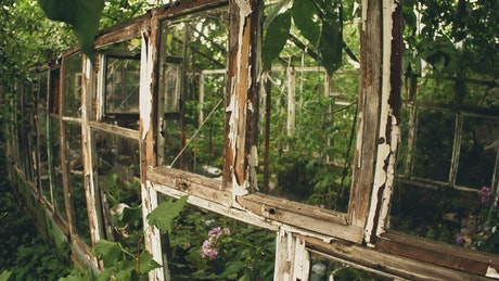 Frame of an old greenhouse