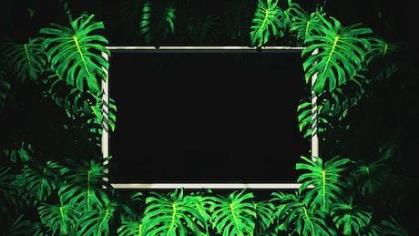 Frames between tropical tree leaves, loop video