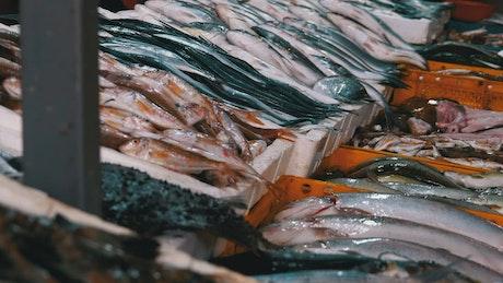 Fresh fish merchandise in the market