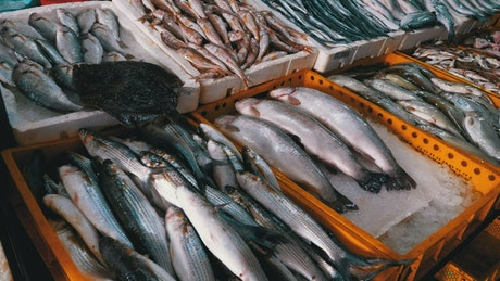 Fresh fish on ice trays