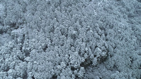 Fresh snow covering a deep forest