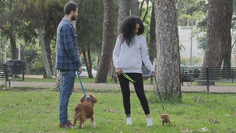 Friends chatting in a park with one dog each