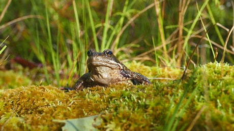 Frog over mossy soil