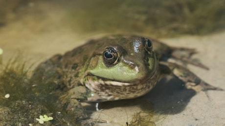 Frog sitting inside a river