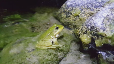 Frog standing in the water