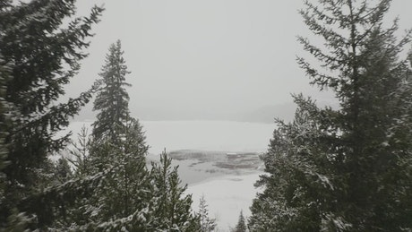 Frozen lake in front of a snowy forest.