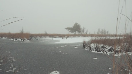 Frozen lake with snow covered trees