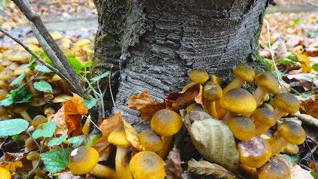 Fungus growing around a tree