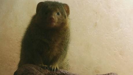Furry animal looking around