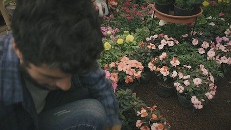 Gardener arranges potted flowers