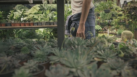 Gardener kneels in front of potted plants